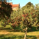 Formowanie koron drzew owocowych
