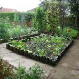 Siejemy warzywa do gruntu