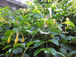piękna roślina ozdobna