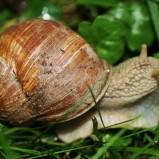 Jak zwalczać ślimaki w ogrodzie?