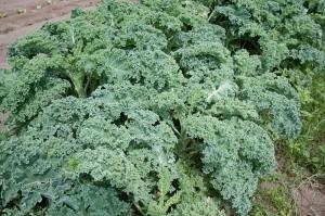nieznane warzywa