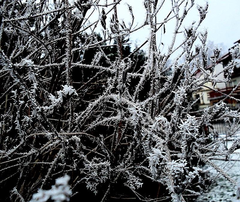 Przygotuj ogród na zimę.