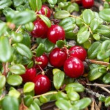 Jakie krzewy owocowe warto mieć w ogrodzie?