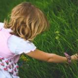 Czym kosić trawę?