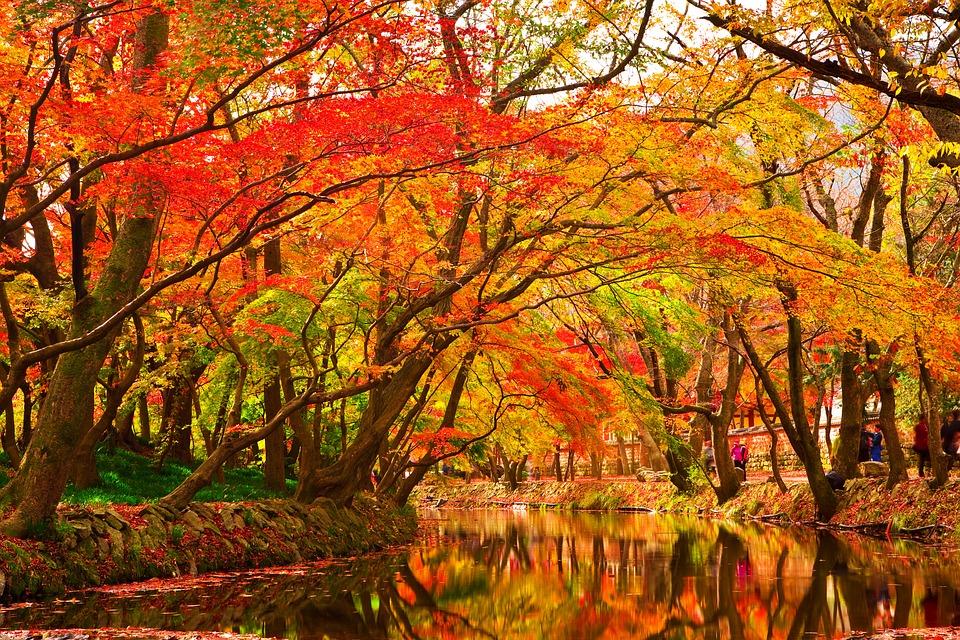 autumn-leaves-1309190_960_720